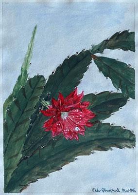 Kaktee, Otto Eberhardt, 1945, Aquarell, Papier, 21x29cm, ID1836