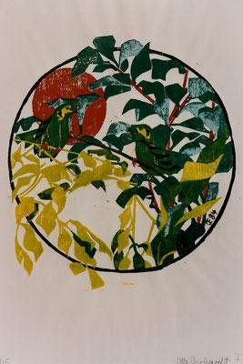 Smaragdbreitschnabel, Otto Eberhardt, 1984, Holzschnitt, Papier, 53x83cm, ID1252