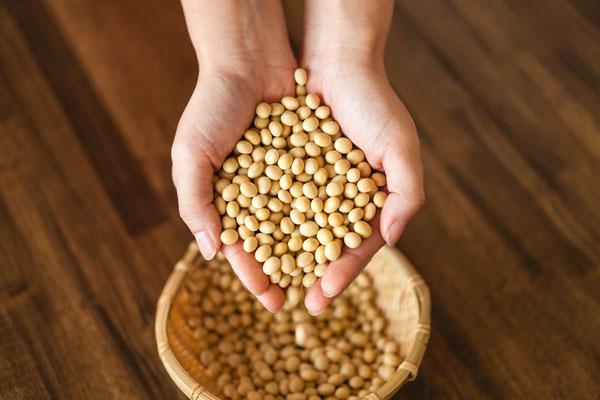 大豆 organic