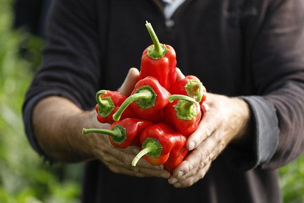Produkt_Gemüse_Direktvermarktung