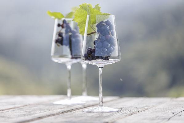 Produkt_Weinbau_Direktvermarktung