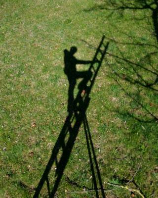 Foto: Wildbrenner - beim Baumschnitt