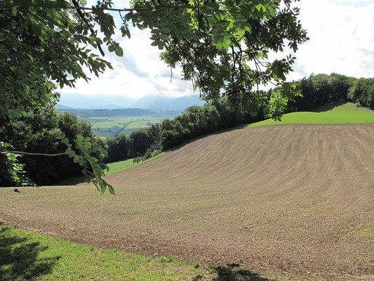 Landwirtschaftsgeometrie.