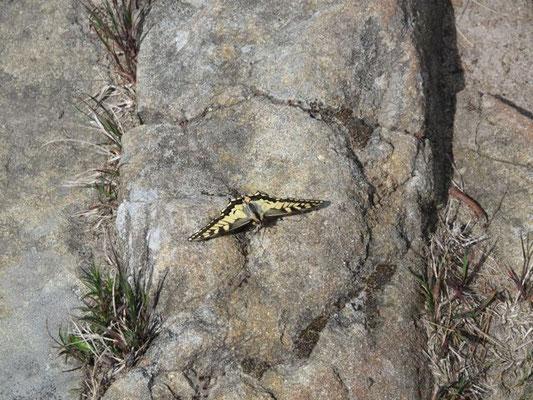 Treue Begleiter: die Schmetterlinge.