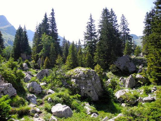 Der Übergang in die Urlandschaft Brecca.