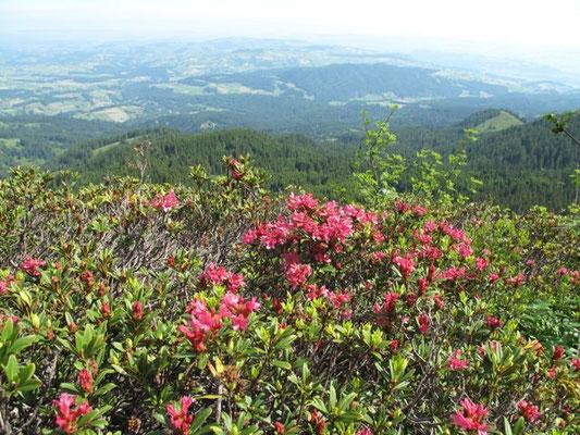 Die Flora von der schönsten Seite...