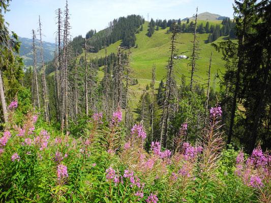 Die wilde Landschaft am Stierenberg.