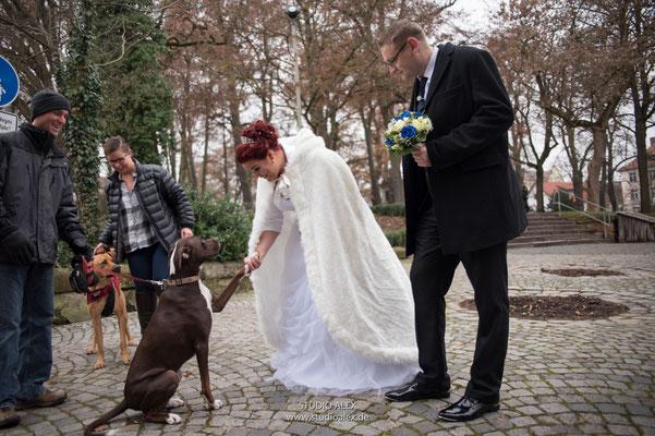 Hochzeitsfotografie lustiges Foto das Brautpaar mit dem Hund