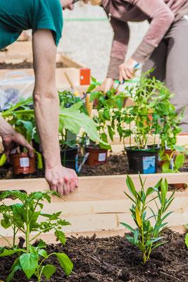 1. Aktionstag:  SBB-Planzkisten Bepflanzung       Fotograf/In: H.Lawson (09.05.2015)