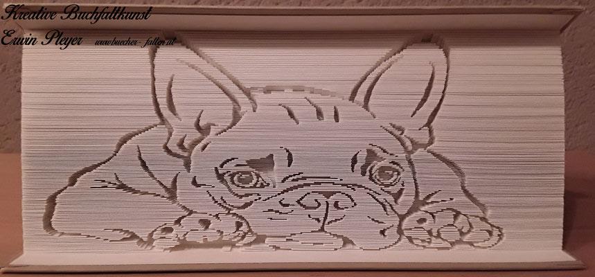 Eine französische Bulldogge, Frenchie, in ein Buch gefaltet, leicht müde und doch zum verlieben.