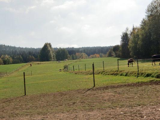 Paddock mit angrenzender Weide