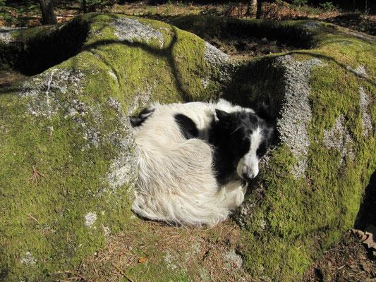 Cupule (les chiens adorent!) - La Baronnie - Noirétable