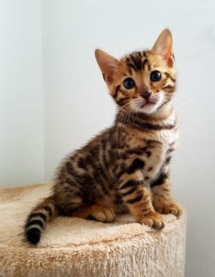 Boy 1 Callandera Cats