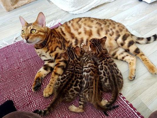 Mika of Wildcats Stars mit ihren 3 kleinen Jungs