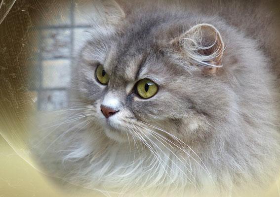 Katzengeburtstagskalender Juni