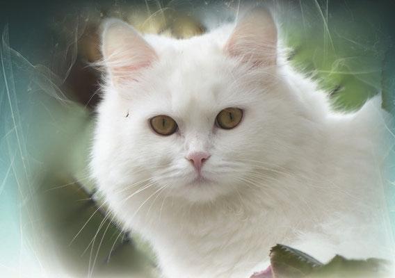 Katzengeburtstagskalender Mai