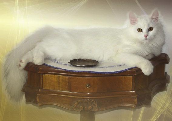 Katzen Geburtstagskalender Dezember
