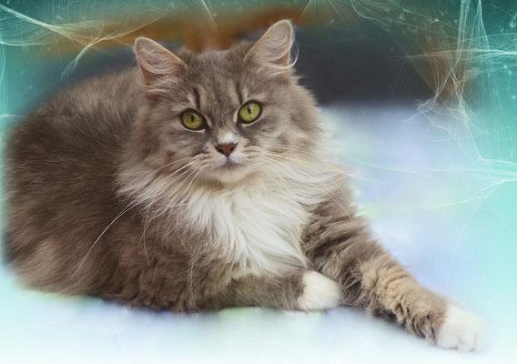 Katzengeburtstagskalender Oktober