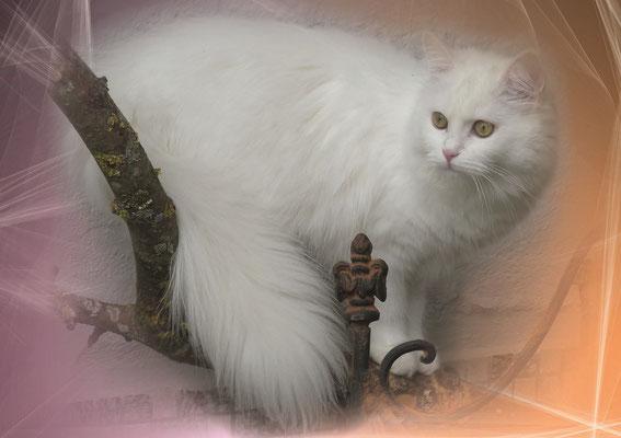 Katzengeburtstagskalender September