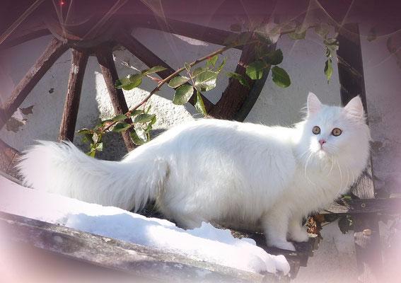 Katzenkalender März