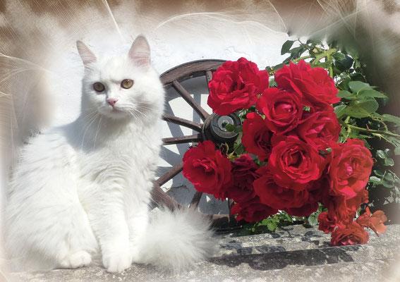 Katzengeburtstagskalender Juli