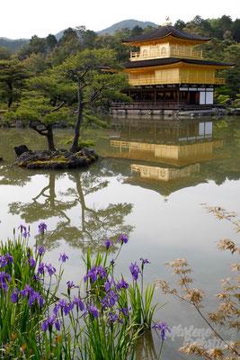 Kinkaku-ji tempel, Kyoto