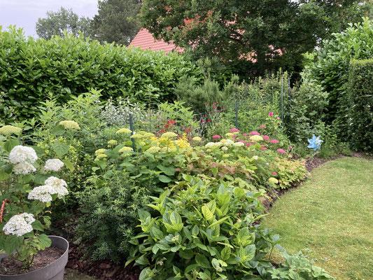 Vue de la chambre sur jardin : dans un écrin de verdure et fleuri en constante évolution selon saison ( début Juillet 2021)