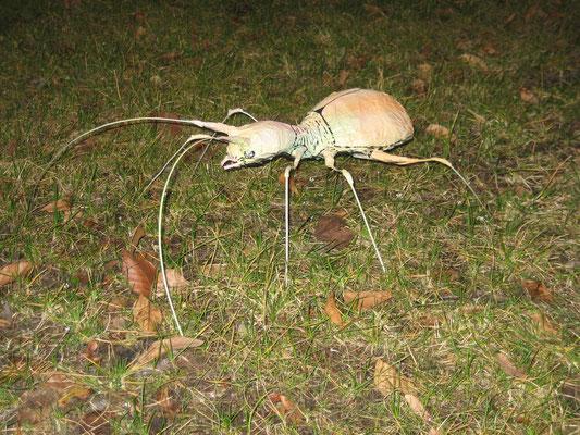 Käfer; Papier und Draht; Aim