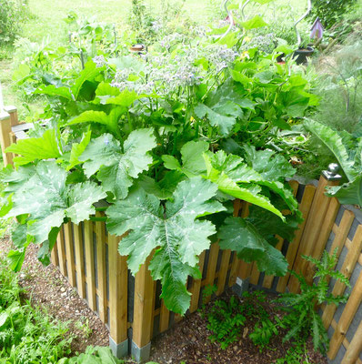 Mein Keyhole Garden am 17.06.16. Zwei Zucchini konnte ich schon ernten, dieses Jahr habe ich endlich Glück mit Zucchini.