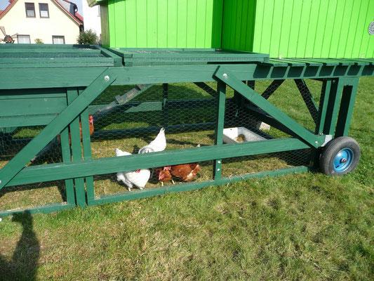Die Hühner genießen die Aprilsonne.