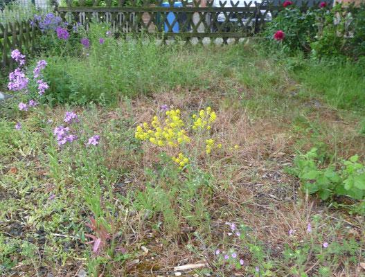 Wildblumen (Färberwaid, kleine Königskerze, Akelei, Storchenschnabel, Nachtviole...) und eine Pfingstrose.