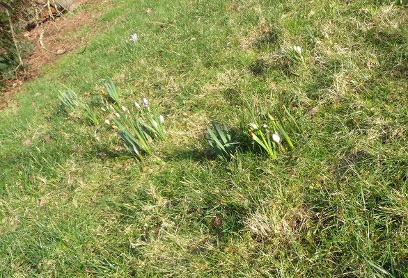 """Die sind ja überall im """"Gras"""" mal verteilt."""