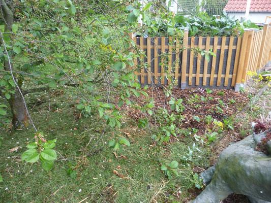 Neu gepflanzte Erdbeeren am Fuße des Keyhole Garden