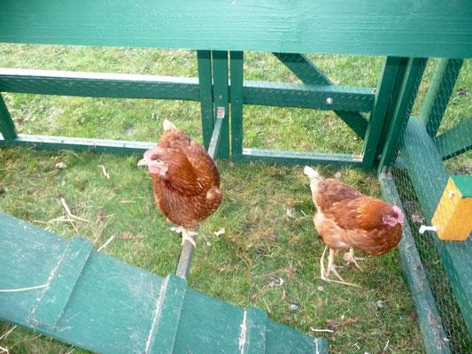 Glück für die Hühner. Sonst steht das Dorf schon mal bis 5 Uhr unter Beschuss...