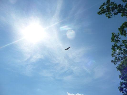 Ein Adler ist auch dabei.