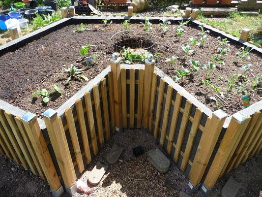 Der Keyhole Garden ist bepflanzt.
