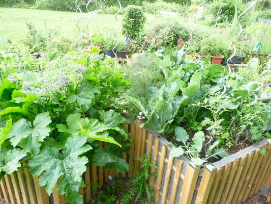 Mein Keyhole Garden am 17.06.16