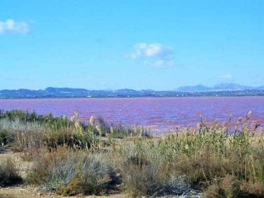 Pink Lagune 2km entfernt
