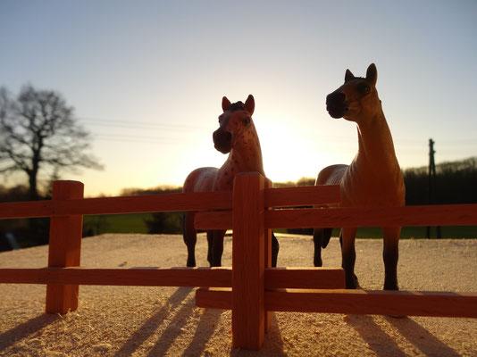 Passend zu Schleich Pferde. Das Holzzaun Set für Modell Pferde- Im Maßstab von Schleichpferden