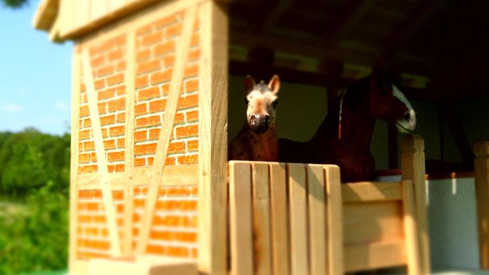 Schmucke Pferdeboxen inkl. Heuraufe und Trog!