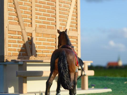 Schleich Pferde Neuheit