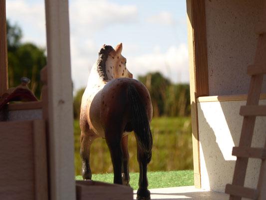 Schleich Pferd guckt nach draußen