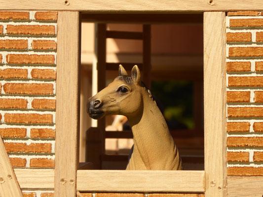 Schleich Pferde schaut aus Fenster