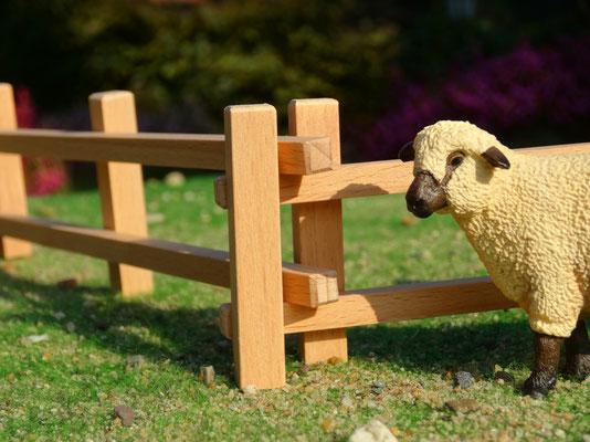 Hier mit einem Schleich Schaf. Das Holzzaun Set für Modell Pferde- Im Maßstab von Schleichpferden