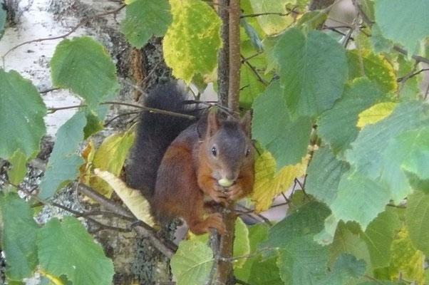 Petit visiteur du matin au gite-Gorses-Lot-Dordogne