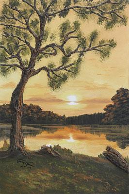 See Baum