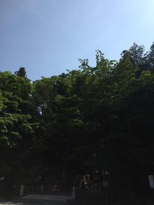秋宮の社叢