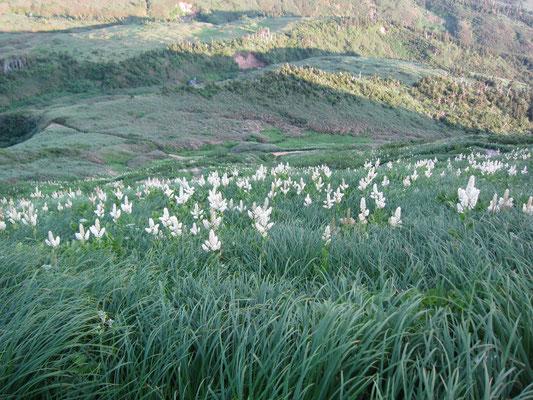 南竜山荘道中でのお花畑