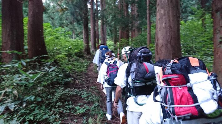 最初は杉林の中をいきます