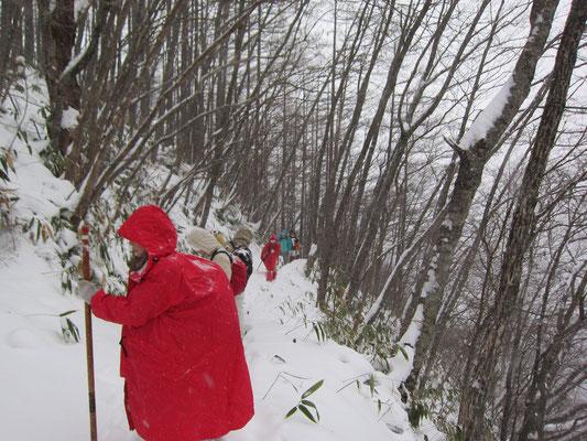 新雪が降り積もっている山道